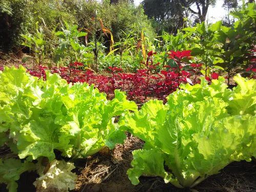 Organic Garden Design Services