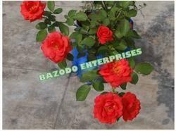 Indoor Flower Plant bag