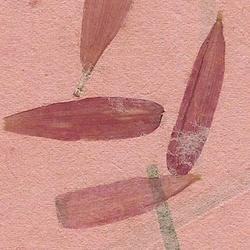 Flower Mottled Handmade Paper with Aster Flower Petals
