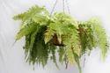 Hanging Planter Fiberglass