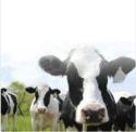 Animals Protein Hydrolysates