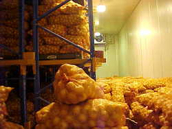 Potato Cold Storage