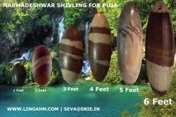 Pure Narmadeshwar Shivling For Temple