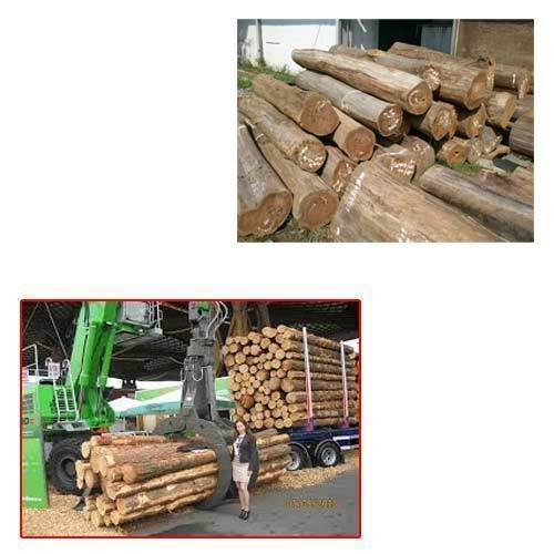 Teak Timber for Timber Industry