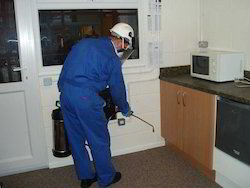 Pest Control Auditing Services