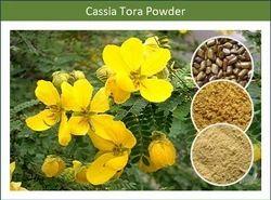 Feeding Cassia Tora Powder