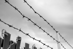 Barbed Wire For Agricultural Fencing