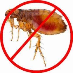 Fleas Control Service