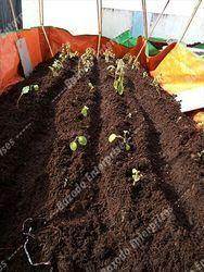 Rooftop Gardening Kit