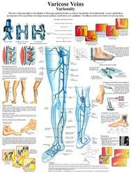 Anatomy & Physiology Charts