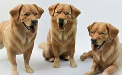 Dog 3D Picture