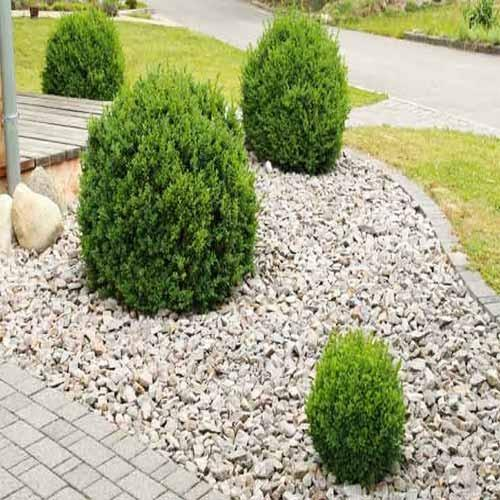 Garden Pebble Stones Garden pebbles garden pebbles stone manufacturer from ahmedabad workwithnaturefo