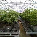 Agro Nets