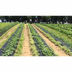 Agricultural Farms Mulch Film