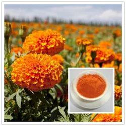 Lutein (Tagetes Erecta) (Marigold) Extract