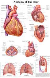 Medical Wall Charts