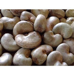 Raw cashew nuts raw geru beejas suppliers traders amp manufacturers