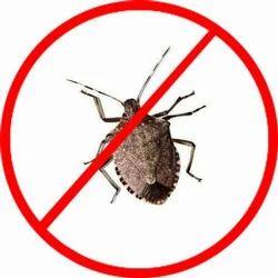 Stink Bug Control Service