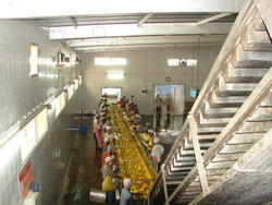 Mango Processing Plant & Machinery