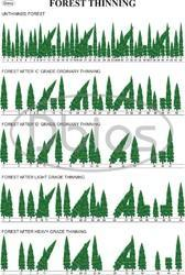 Forestry Department Charts