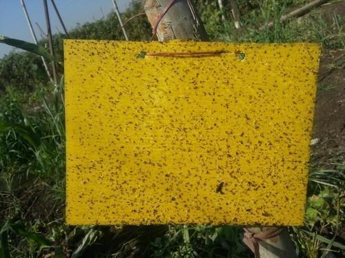 Yellow Sticky Pad