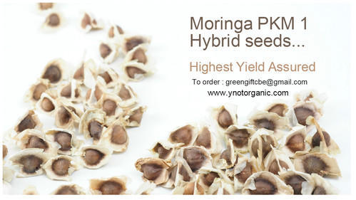 High Yield Moringa Pkm 1 Hybrid Seeds