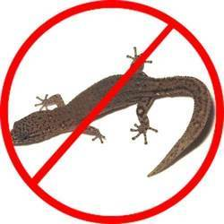 Lizards Controlling Treatment