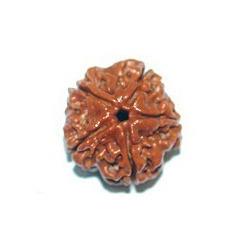 Natural 5 Mukhi Nepali Rudraksh Bead Original