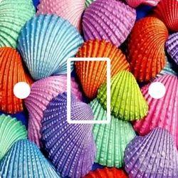 Colored Seashell - Good Quality Color