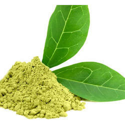 Camellia Sinensis - Green Tea Extract
