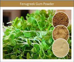 Odourless Fenugreek Gum Powder