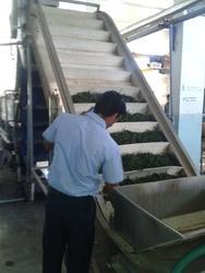 Vegetable Processing & Freezing Machinery