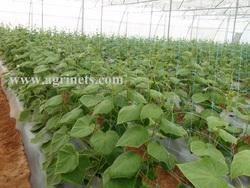 Plants Netting