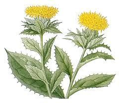 Aromablendz Safflower Oil