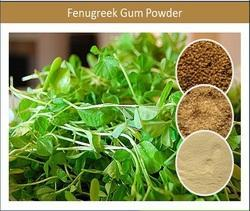 Health Beneficial Fenugreek Gum Powder