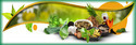 Herbal Pharma Franchise