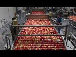 Apple / Pears / Passion / Strawberry Processing Machinery