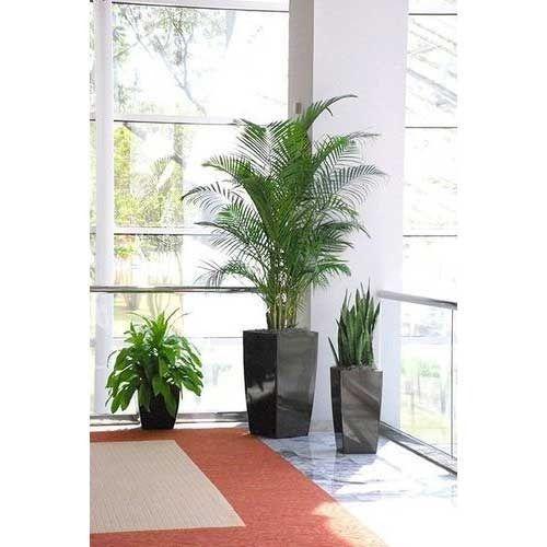 office indoor plants. Corporate Office Decoration Plant Indoor Plants