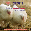 Grofit