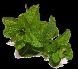 Spearmint Terpene