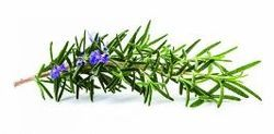 Aromablendz Rosemary Oil