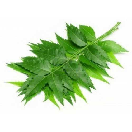 neem-leaves-500x500.jpg