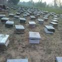 Honey Bee boxes