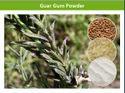 Cost Effective Guar Gum Powder