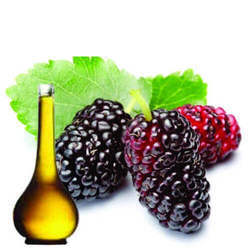 Mulberry Soluble Oil