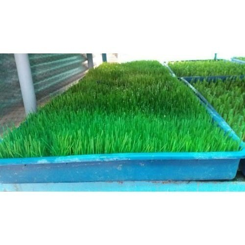 how to build a hydroponic fodder system in india