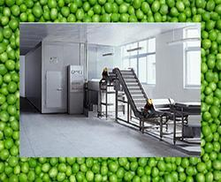 Frozen Green Peas Processing Machinery