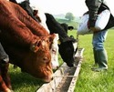 Supplements in Cattle, Poultry Feed