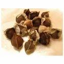 Moringa Oleifera - Moringa Seeds