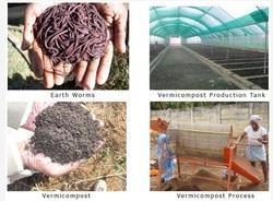 Vermicompost Plant Growth Promoters